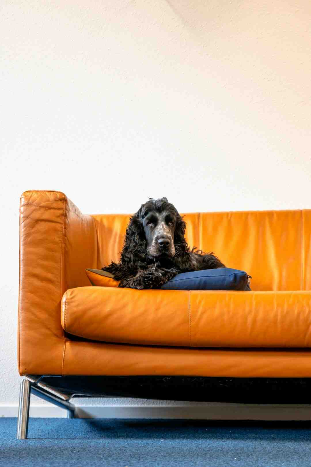 Does tin foil keep dogs off the couch?