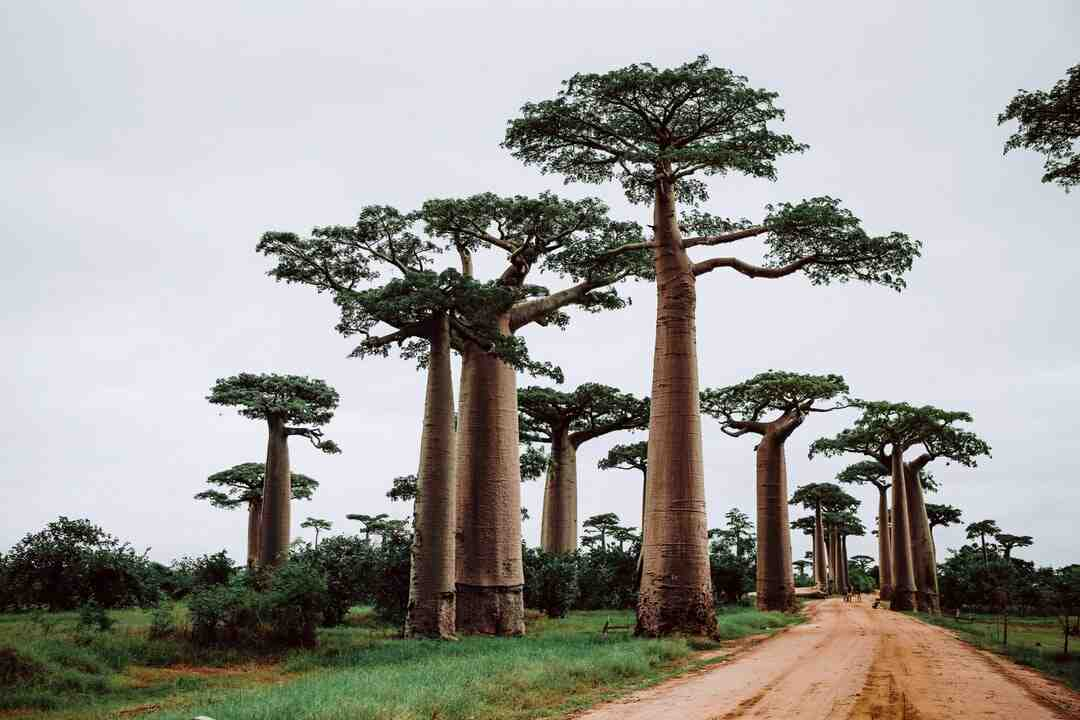 Where do tourists stay in Madagascar?