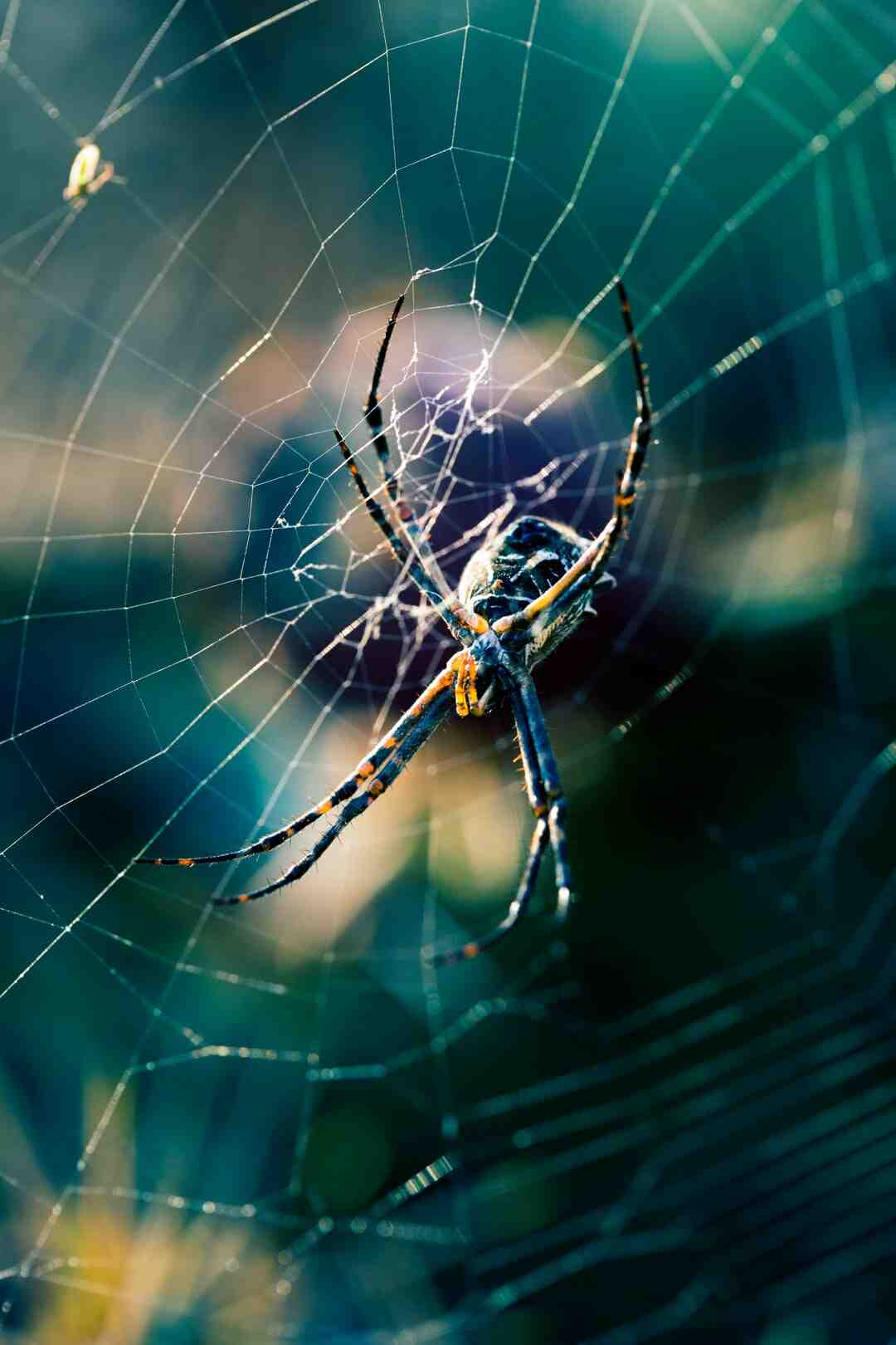 How do I find out where spiders are coming from?