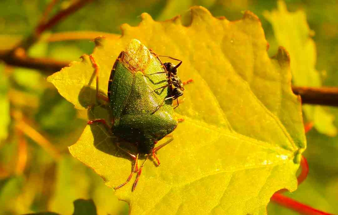 How do you lure bugs out of hiding?